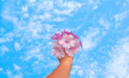 purple ,violet flower holding in hand with blue sky ,fresh and relax spring nature background Banco de Imagens