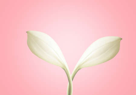 white flower crossing  on pink pastel background
