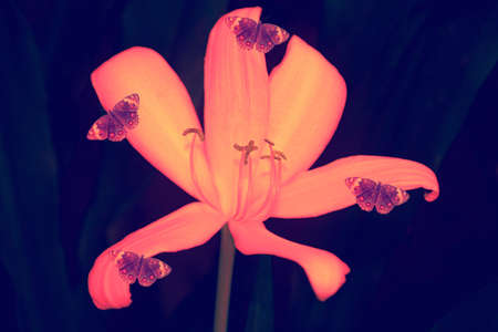 pink flower with butterfly abstract spring nature wallpaper background