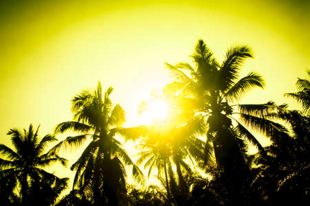 Silhouette  coconut tree at sunset abstract summer background Archivio Fotografico - 129273144