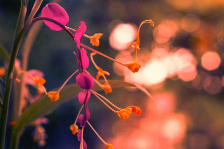 beautiful purple flower like swans  shape with light yellow bokeh background Stock Photo
