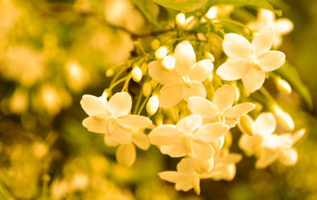 little white flower blooming spring nature wallpaper  background