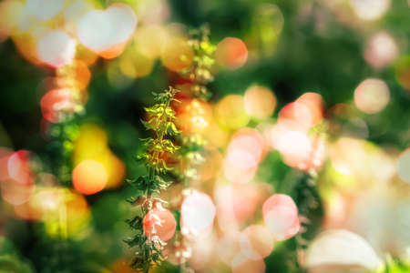 wild flower with bokeh light  spring nature  wallpaper background