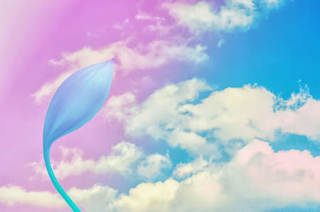 blue sky and clouds  with  colorful flower pastel  filter effect  ,Abstract spring summer  ,sweet ,romantic color nature background Stock Photo