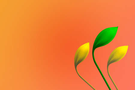 colorful flower with orange  background and  copy space