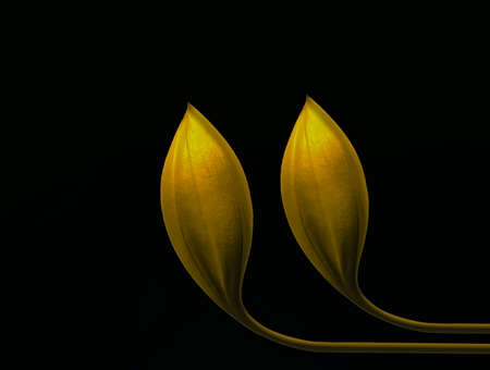 golden flower  on dark background