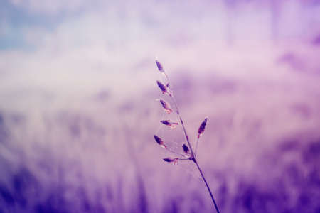 grass flower  fresh  nature spring ,autumn ,summer wallpaper relax photo  background,violet color filter  effect