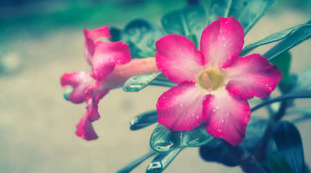 Pink flower blooming spring nature background