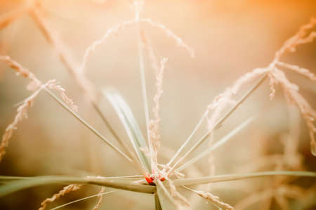 Brown  grass flower soft focus nature background
