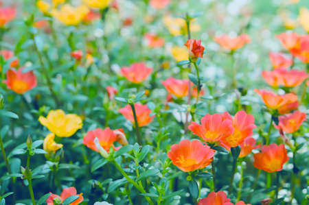 soft focus spring orange and pink   flower background