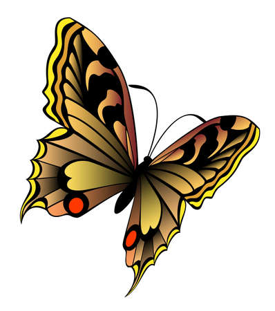 protecting: Beautiful butterflie