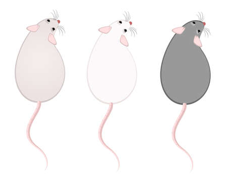 inducement: Lovely fluffy mice on a white background