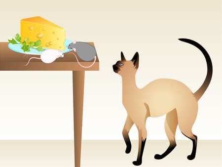 The cat watches the mouse which eats cheese on a table photo
