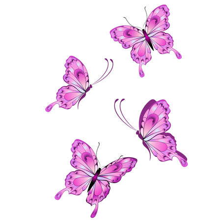 purple butterfly: Beautiful tropical butterfly