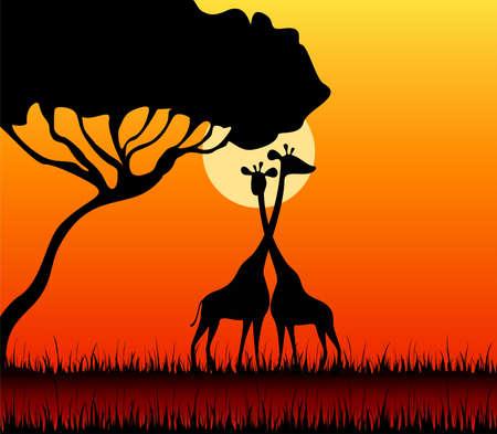 Silhouettes of giraffes against a decline in a safari photo