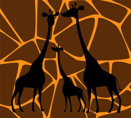 Silhouette of two giraffes photo