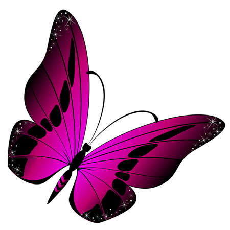 purple butterfly: beautiful tropical butterfly Illustration