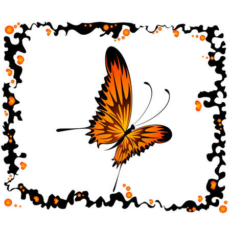 beautiful tropical butterfly Stock Vector - 5578042