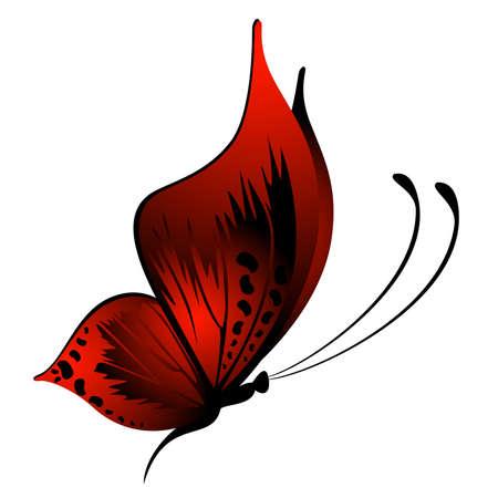 farfalla nera: belle farfalle tropicali Vettoriali