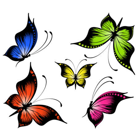 butterfly wings: beautiful tropical butterfly Illustration
