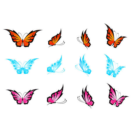 beautiful tropical butterfly Vector