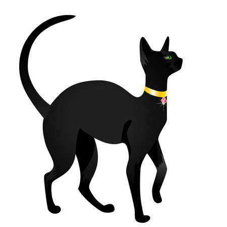 Beautiful black cat on a white background for design Illustration