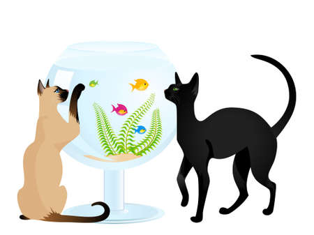 The cat plays with a small fish in an aquarium a white background photo