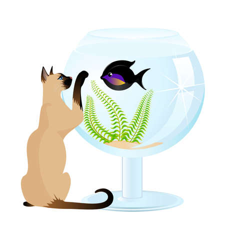 The cat plays with a small fish in an aquarium a white background Vector