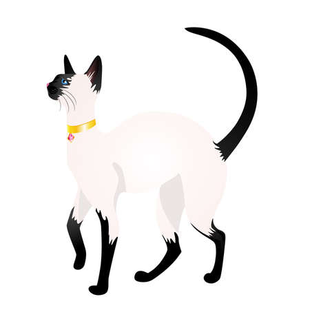 Beautiful cat on a white background Stock Vector - 6417120