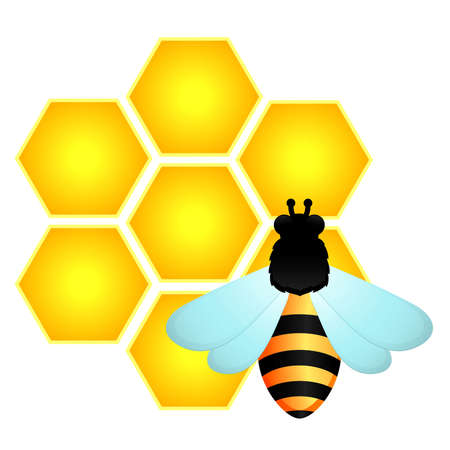 Funny bee and honeycombs Vector