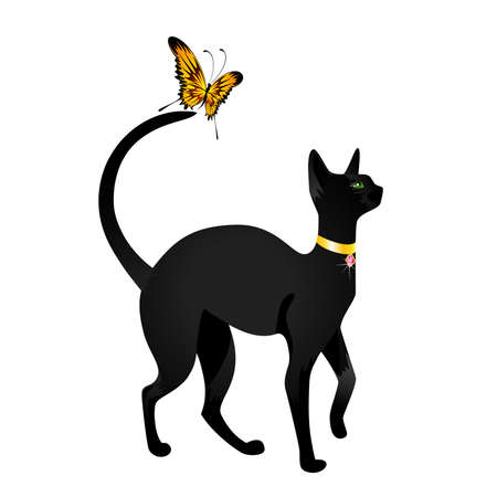 blue siamese:  black cat on  background with the butterfly