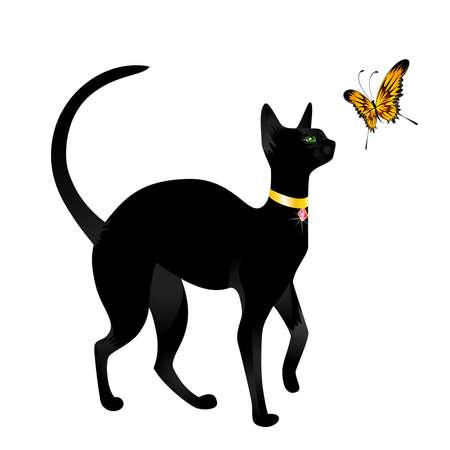 siamese:  Schwarze Katze auf Hintergrund mit dem Schmetterling