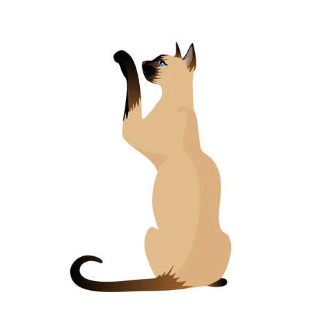Beautiful Siamese cat Stock Vector - 7048445