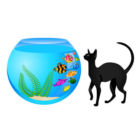 cat with little colorful tropical fish in aquarium Vector