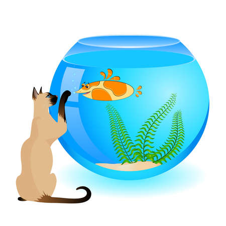 cat with little colorful tropical fish in aquarium Stock Vector - 7145267