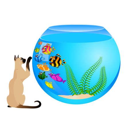 cat with little colorful tropical fish in aquarium