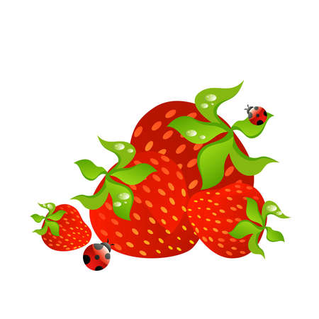 delightful: Beautiful bright cards with the image of berry