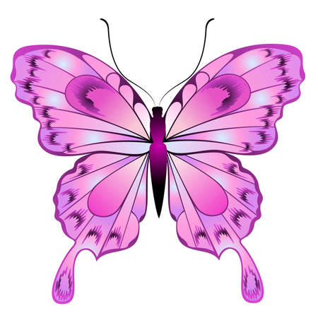 Beautiful butterfly for a design