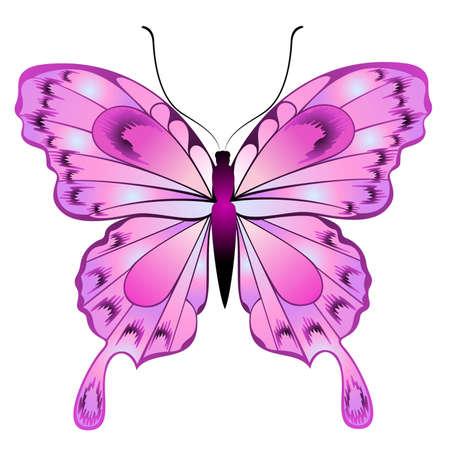 Bella farfalla per un design Vettoriali