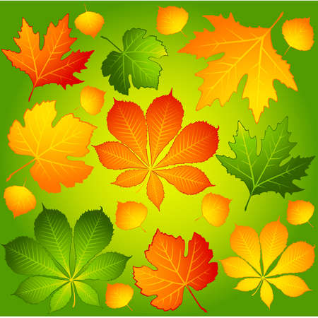 Background with autumnal leaves. Stock Vector - 8470426