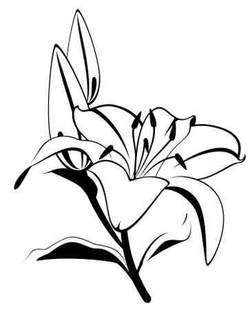 botanics: Beautiful tropical lillies