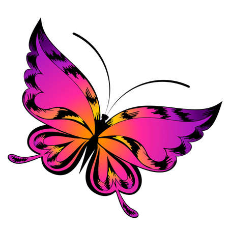 purple butterfly:  beautiful butterfly