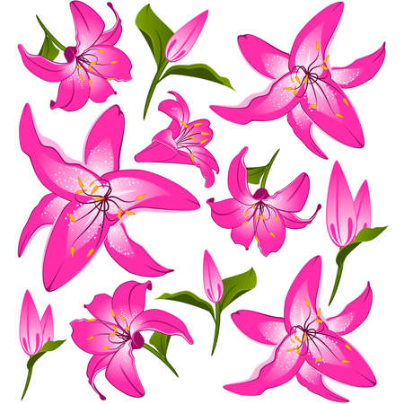White background with beautiful pink flowers. Vector