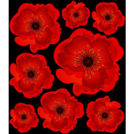 botanics: Beautiful poppy. Vector