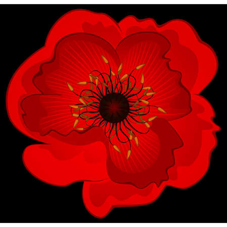 Beautiful poppy. Vector