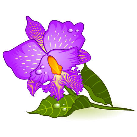 Beautiful violet orchid. Vector