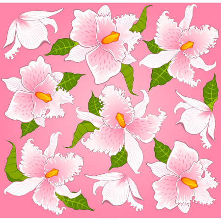 Vector background with beautiful orchids Vector