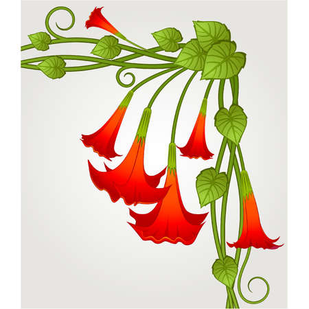Background with beautiful tropical lillies Vector