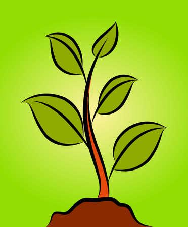 green plant Stock Photo - 10326970