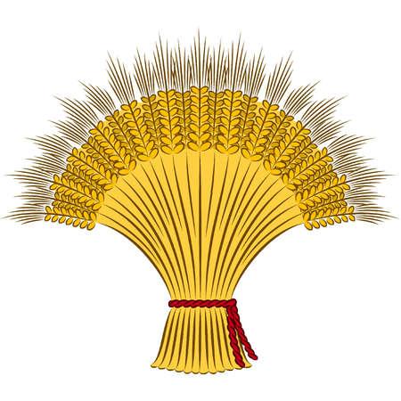 sheaf: Vector gavilla de trigo sobre un fondo blanco
